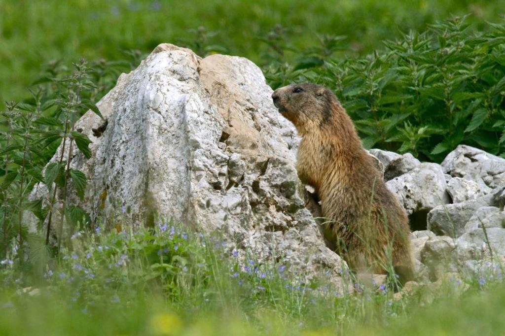 vacanza trekking in Paganella per percorrere i migliori itinerari trekking sulle Dolomiti in Trentino