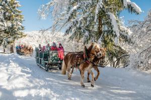 Vacanze invernali ad Andalo: Anteprima inverno