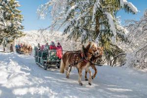 Vacanze sulla neve<b> PER CHI NON SCIA</b>